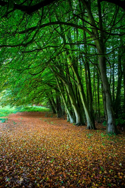 Woodland Glade - Dave Hare Photography