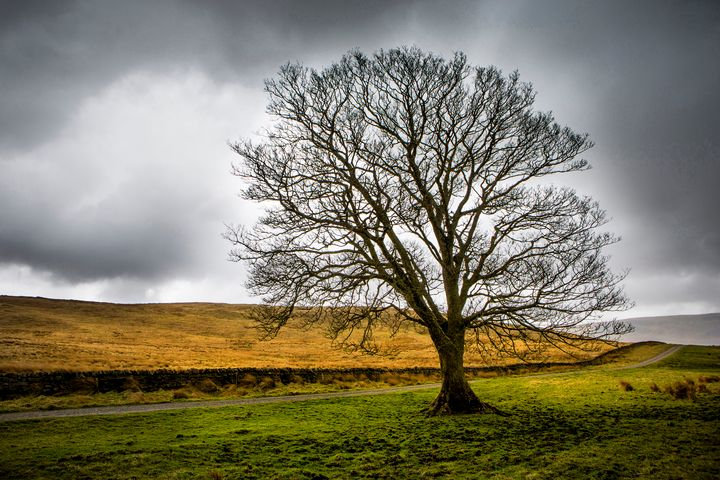 Single tree in stormy weather - Dave Hare Photography