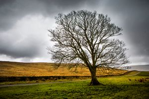 Single tree in stormy weather