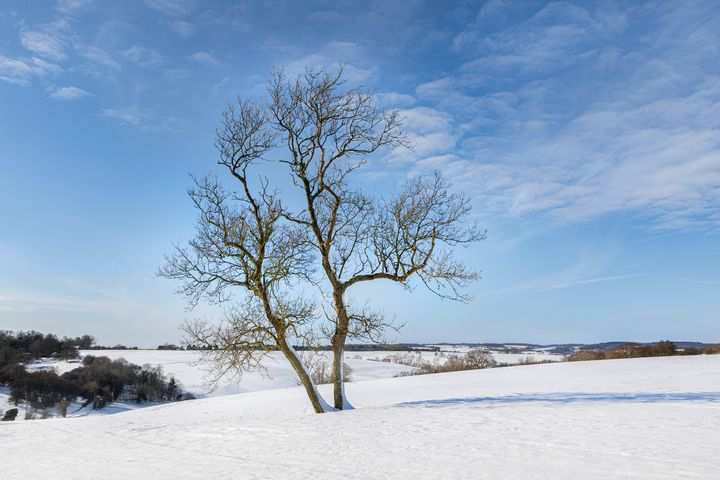 Tree in snow - Dave Hare Photography