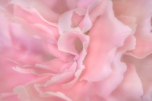 Soft Pink Flora
