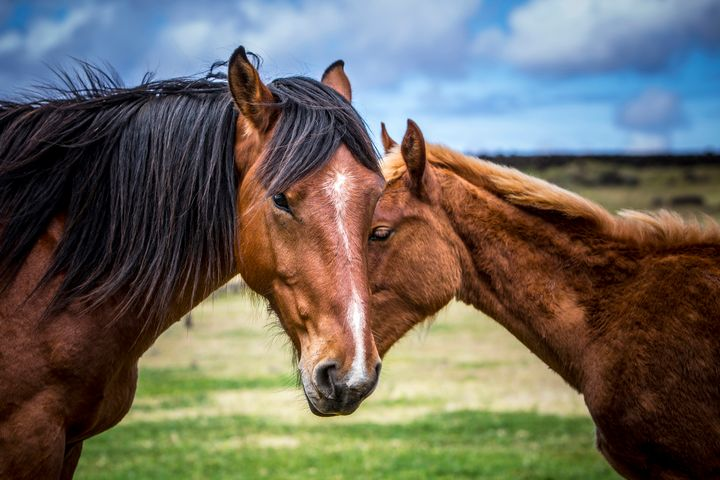 Mother and son - Dave Hare Photography