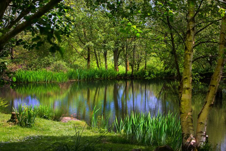 dartmoor Pond - Dave Hare Photography