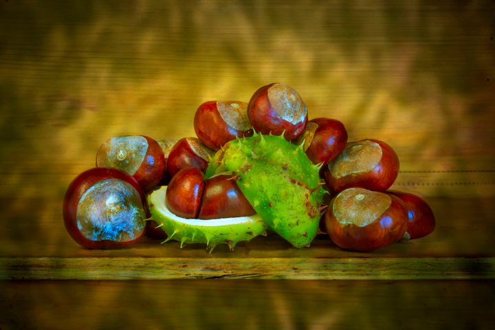 Conkers - Dave Hare Photography