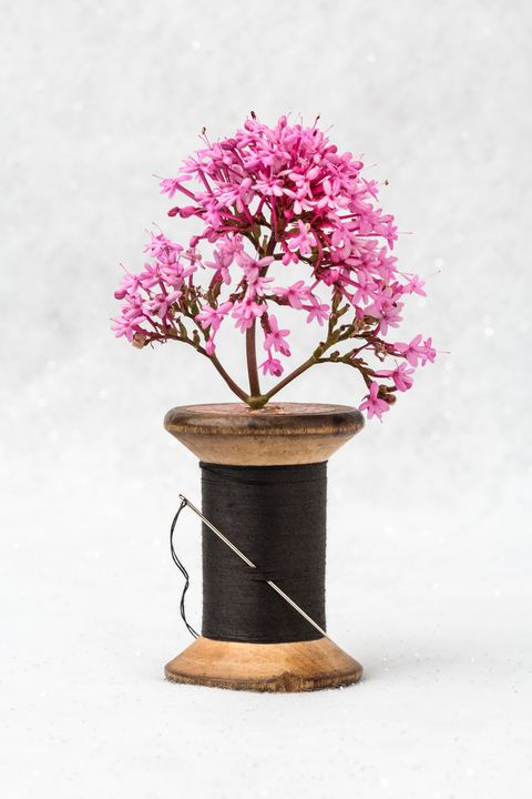 Wooden Vase - Dave Hare Photography