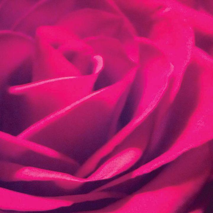 Pink Rose - Nicole Rex