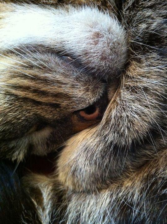 Nose or Eye ? - The Wart Ogre