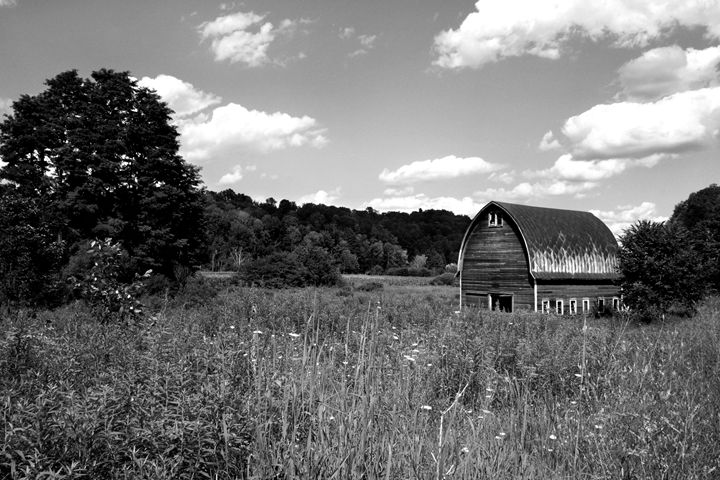 Barn in the Woods - KCBlack&White