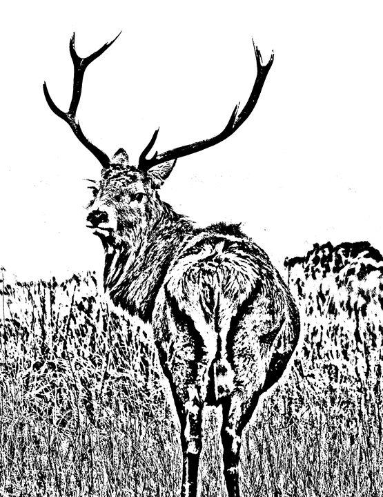 Deer Buck sketch - KCBlack&White