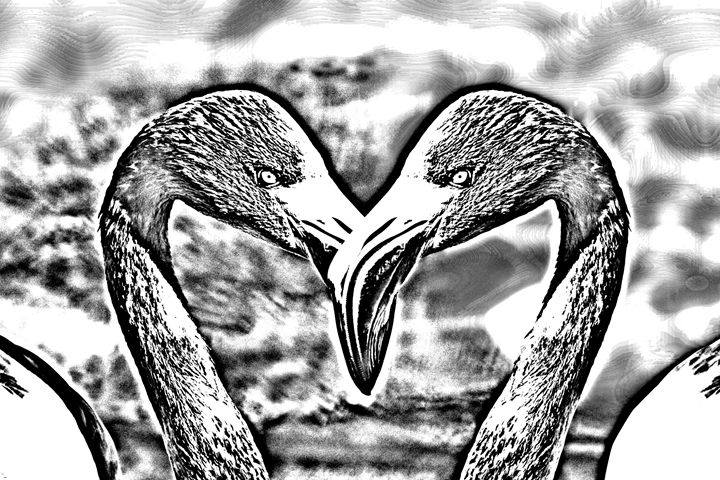 Kissing Flamingos Heart Sketch - KCBlack&White