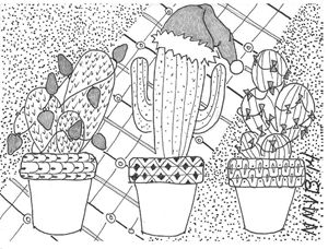 3 Christmas Cactus