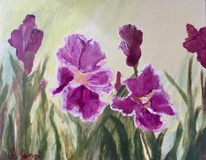 Lovely Purple Irises