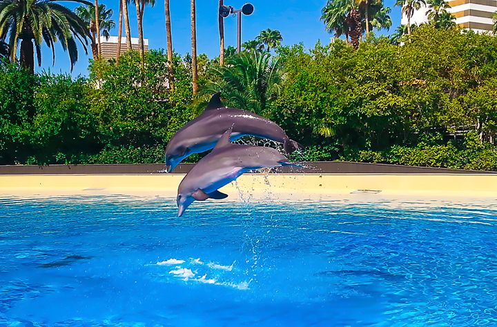 Dolphins Dance - Art Photos