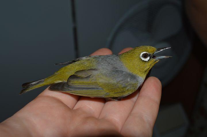 Bird In Hand - CT 101 Landscarpes