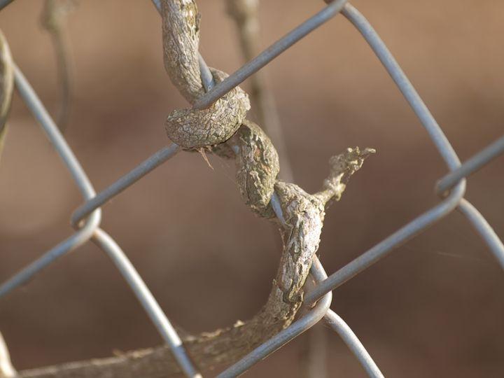 Locked in - CT 101 Landscarpes