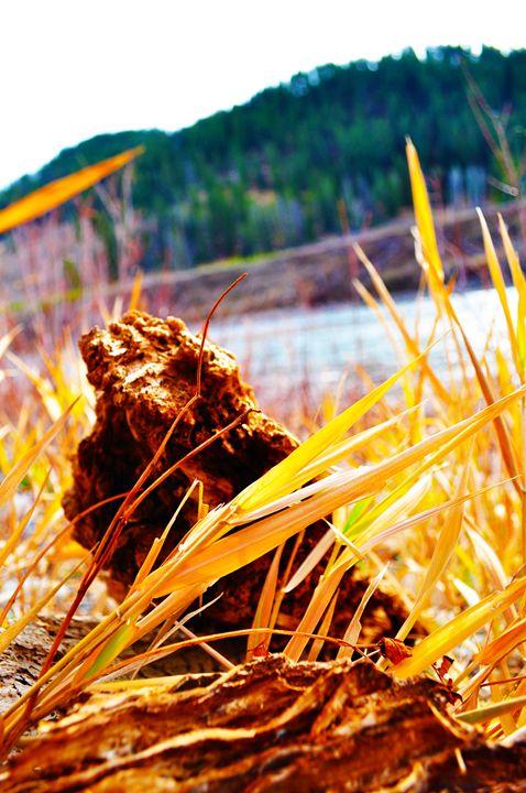 Grasses on the banks of the Snake - Cummins Art