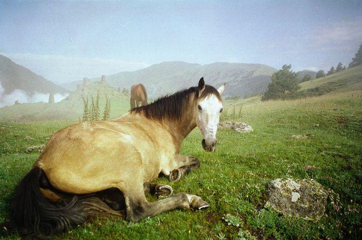 Horse of Tusheti - Tom Pinnegar