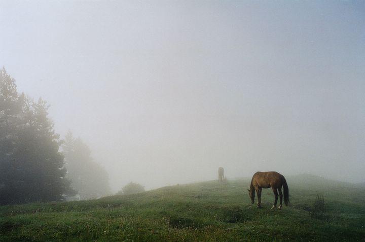 Misty morning with horses - Tom Pinnegar