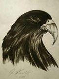 "8""x11"" charcoal rendering, hawk"