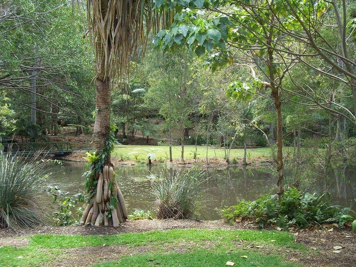 Tropical trees - Maxxams