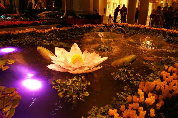 Lotus Pond - ANJC