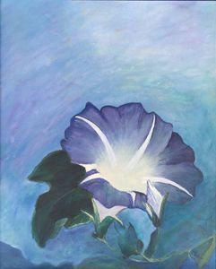 Glorius Morning Glory