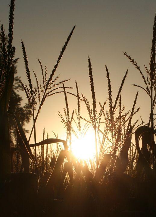 Sundown - Thoughts Captured