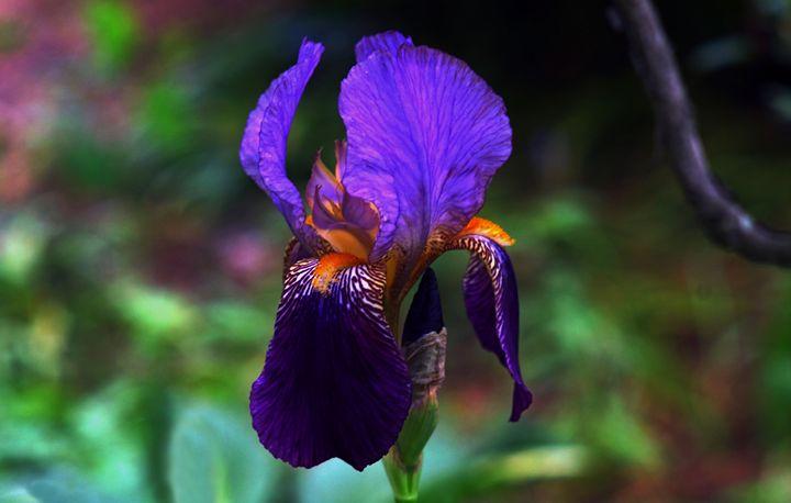 Deep Purple - Jamiol's Art