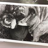 Original photo and print
