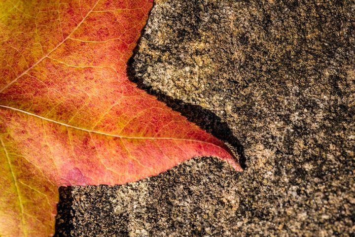 Fallen Autumn Leaf 05 - Eva Bane