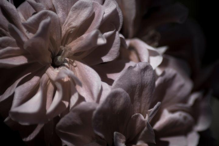 Romantic Flower 03 - Eva Bane