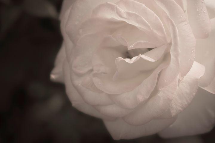 Romantic Flower 05 - Eva Bane