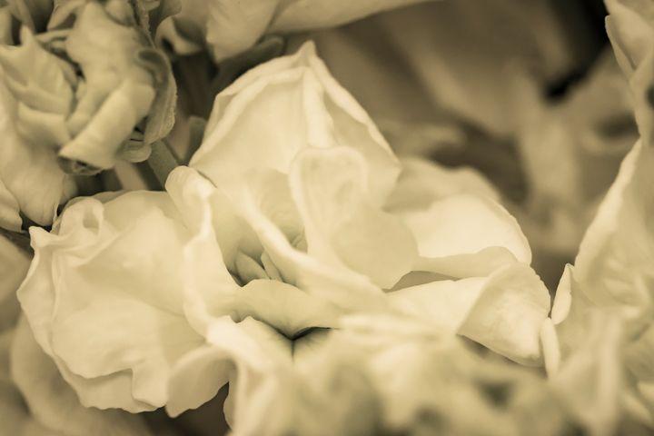 Romantic Flower 09 - Eva Bane