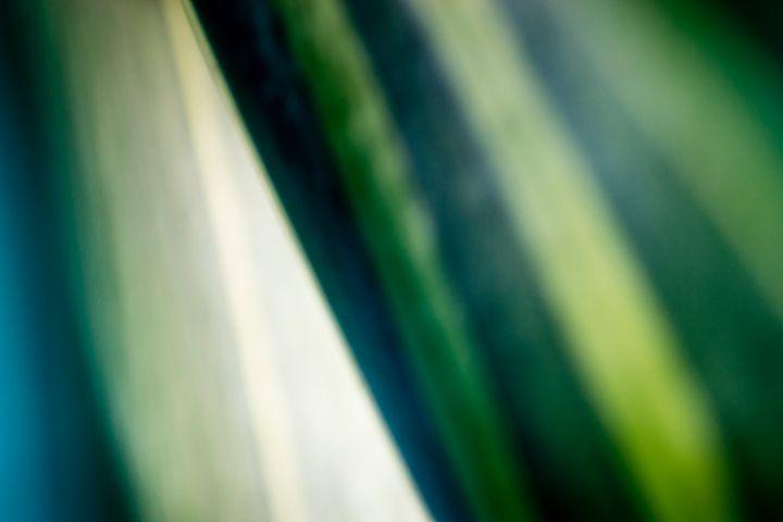 Agave Abstract 05 - Eva Bane