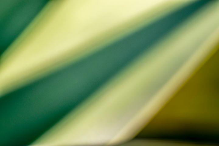 Agave Abstract 07 - Eva Bane