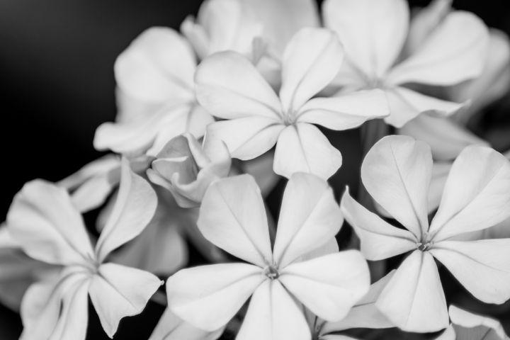 Black and White Botanical 01 - Eva Bane