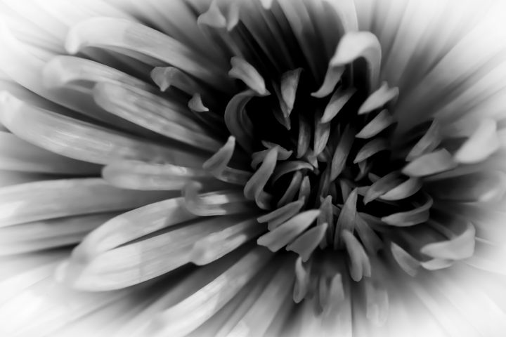 Black and White Botanical 10 - Eva Bane