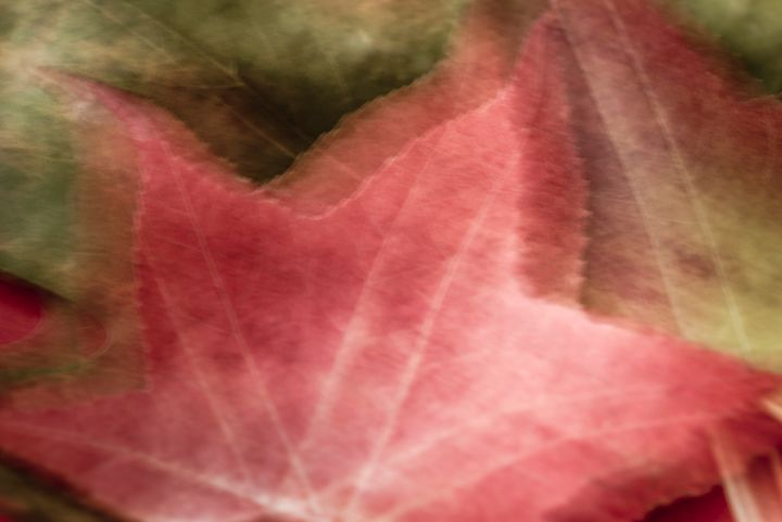 Autumn Impression 03 - Eva Bane