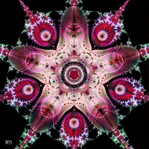 Strawberry Starfish - Pavelle Fine Art