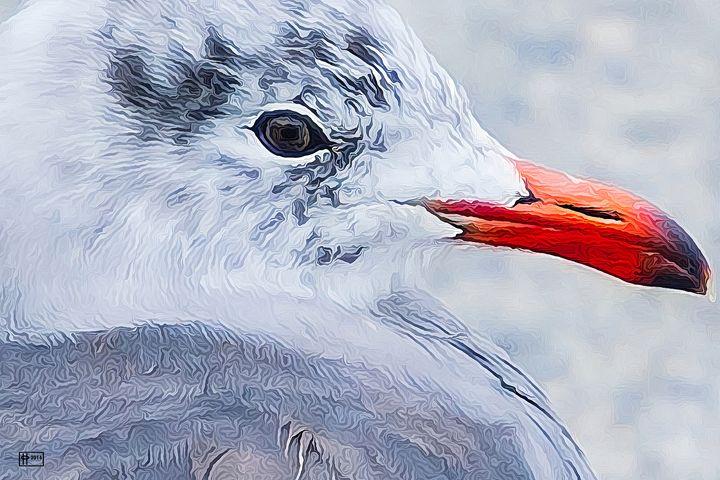 Gull I - Pavelle Fine Art