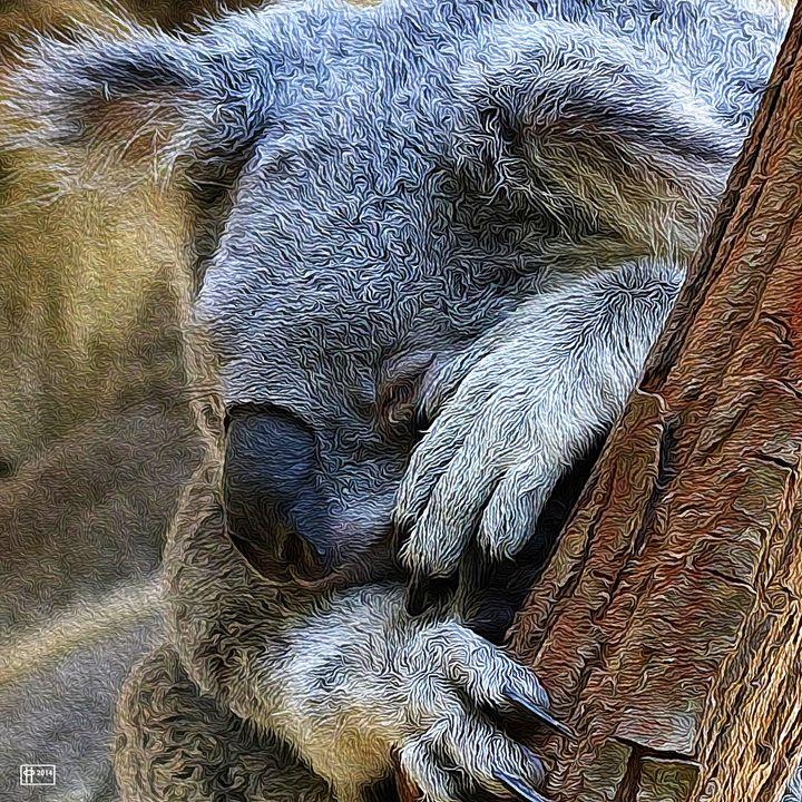 Sleeping Koala - Pavelle Fine Art