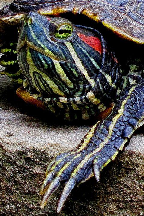 Tortuga - Pavelle Fine Art