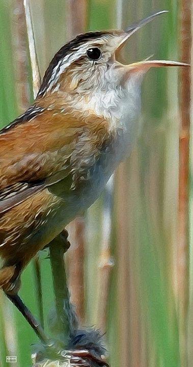 Marsh Wrendition - Pavelle Fine Art