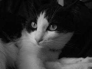 Blak & White Cat