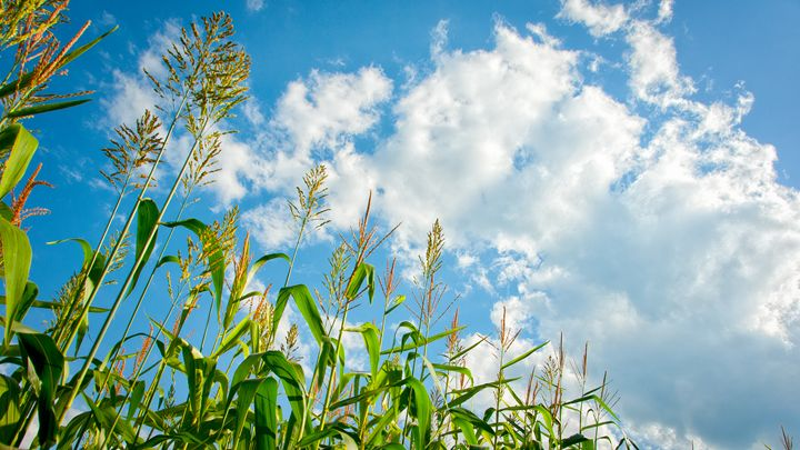 Plants and Sky - SCL Photography
