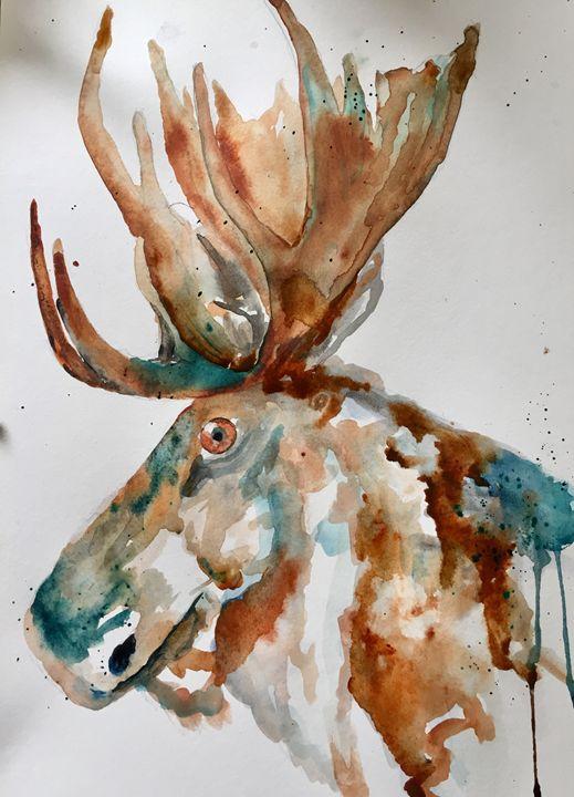 Canadian moose - A Splash of Colour