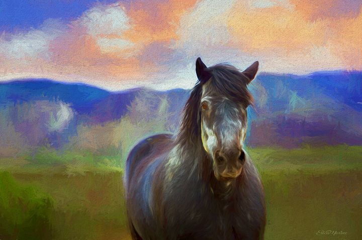 Wild Pinto 400 - Painting - White Roe Art and Design