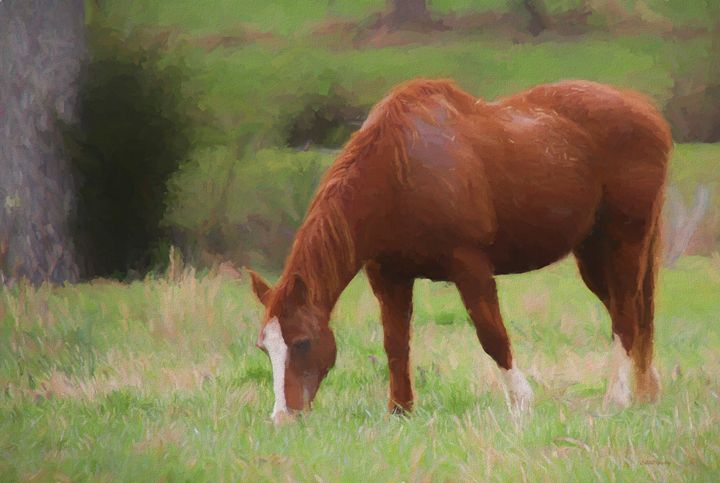 Horse in the Field 1106 - Painting - White Roe Art and Design