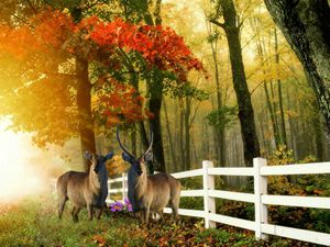 FALL SCENE - White Roe Art and Design
