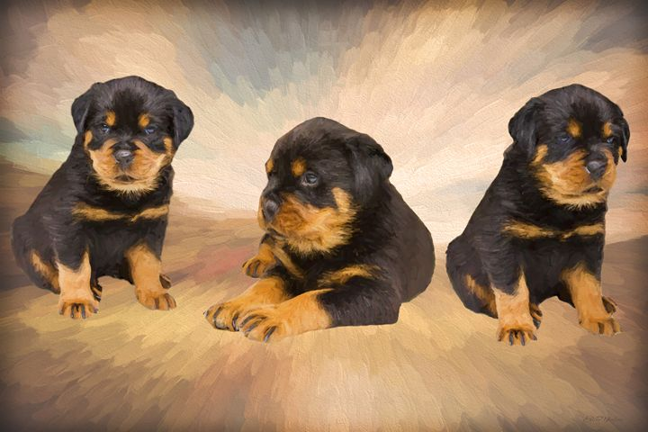 Rottie Puppies - Painting - White Roe Art and Design